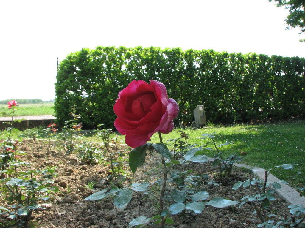 La Rosa Bella Ciao